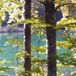 Bäume+See